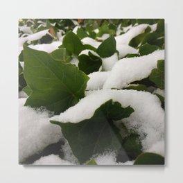 Ivy in Snow Metal Print