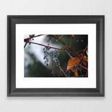 Grapes in a Morning Rain Framed Art Print