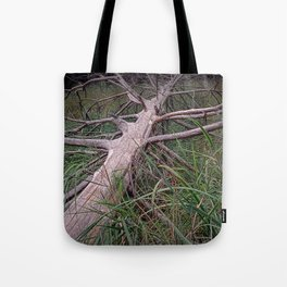 Fallen Pine Tree at Ludington State Park, Michigan Tote Bag
