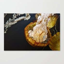 SEA NETTLE Canvas Print