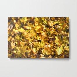 Autumnal Colours Metal Print