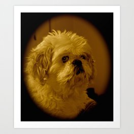 """Denali"" - Lap Dog Art Print"