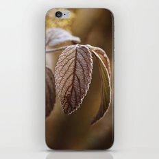 November Frost iPhone & iPod Skin