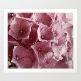 Blossom Hydrangea Art Print