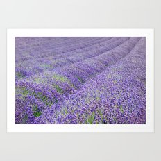 LAVENDER MOOD Art Print