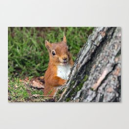 Nature woodland animals smiling squirrel Canvas Print