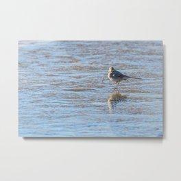 White Wagtail, Cute little bird (Motacilla alba) on ice, frozen pond winter Metal Print