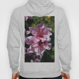 Peach Tree Blossom With Garden Background Hoody