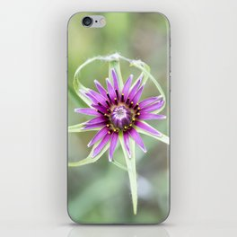 Tragopogon porrifolius L.  iPhone Skin