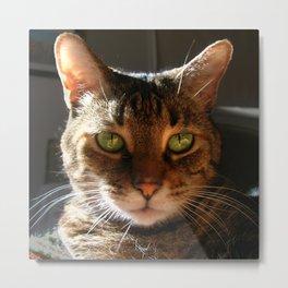 Marley the Mackerel Tabby Cat with Intense Green Eyes Metal Print