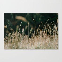 Sunkissed Grass Canvas Print