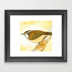Yellow Carolina Wren Framed Art Print