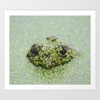 The Incognito Frog Art Print