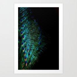 Peacock Details Art Print