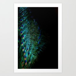 Peacock Details Kunstdrucke