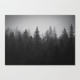 Forest of old Canvas Print