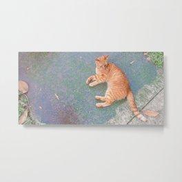 Cat Lounging Metal Print