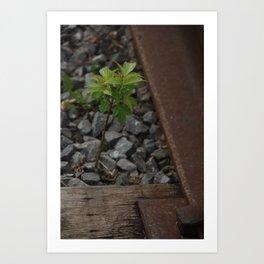 Little 'Green Leaf' On The Tracks Art Print