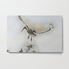 sacred ibis bird fly in the sky Metal Print