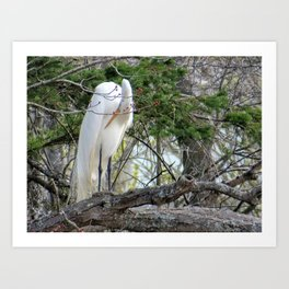 GREAT WHITE EGRET (4 OF 4) - BOWING Art Print