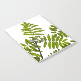 Green Rowan Leaves White Background #decor #society6 #buyart Notebook