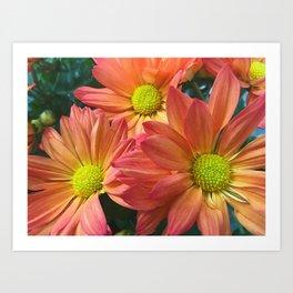 Cream and Pink Flower Close Up Art Print