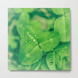 Clover leaf in the rain Metal Print