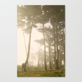 Fairy Forest, San Francisco Canvas Print