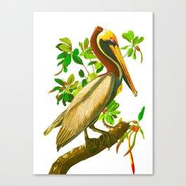 Brown Pelican Vintage Illustration Canvas Print