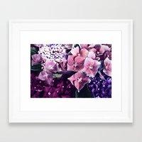 hydrangea Framed Art Prints featuring Hydrangea  by Truly Juel