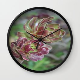 Close Up Of Succulent With Garden Background Wall Clock