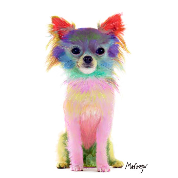 Colorful chihuahua Comforters