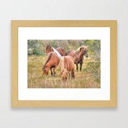 Wild Herd  Framed Art Print