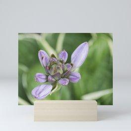 Lavender Velvet Slippers Mini Art Print