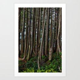 Cape Flattery Trees 2 Art Print