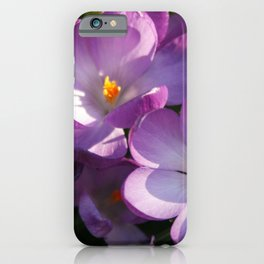 Purple Crocus | Flowers | Floral | Nature Photography iPhone Case