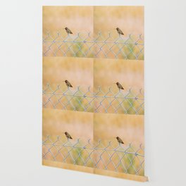 Ana's Hummingbird on a fence Wallpaper