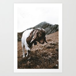 Hello Goat / Switzerland Art Print