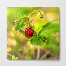 Wild strawberry Metal Print