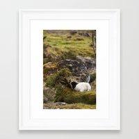 lamb Framed Art Prints featuring Lamb by Aaron MacDougall