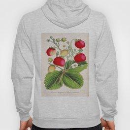 Strawberry Delights Vintage Botanical Floral Flower Plant Scientific Illustration Hoody