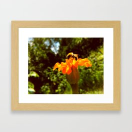 bee of autumn Framed Art Print