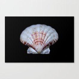 Scallop Shell sea shell Canvas Print