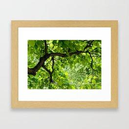 Peek into the Summer Trees Framed Art Print