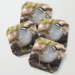 Profile of a White-Crowned Sparrow Coaster