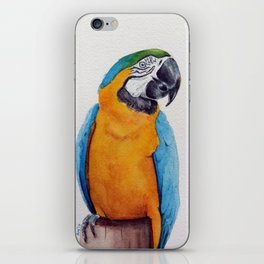 Macaw II iPhone Skin