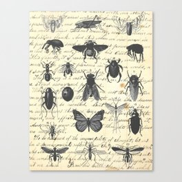 Insect Study on antique journal paper Canvas Print