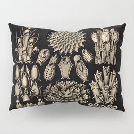 """Bryozoa"" from ""Art Forms of Nature"" by Ernst Haeckel Pillow Sham"