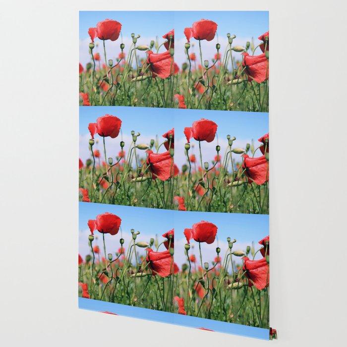 poppy flower no13 Wallpaper