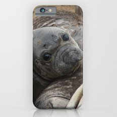 elephant seal pup Slim Case iPhone 6s